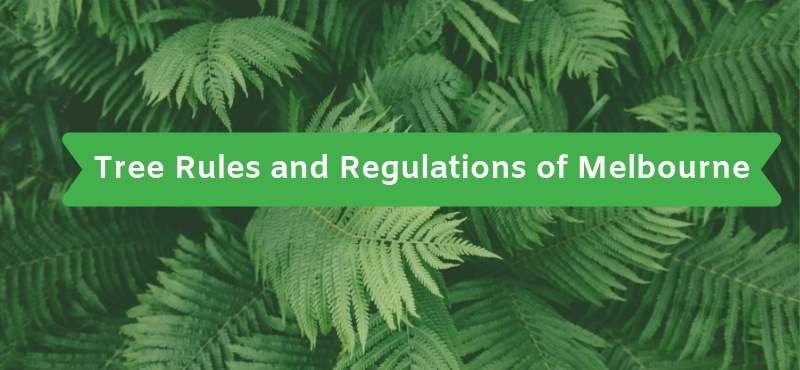 Tree Rules and Regulations of Melbourne